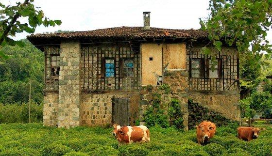 Köyde Yaşamak için ve Köyde Para Kazanmak İçin Ne Yapmalı?